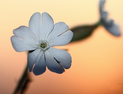 sunset-flowers2