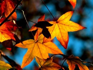 Pretty-Autumn-Leaves