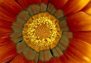 flower-spores-1003593-ga