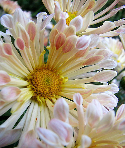 crowded-mums-500px