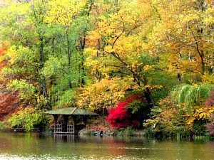 fall_colors_in_central_park