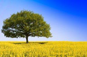 gift-card_tree-field