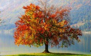 autumn_tree_1920