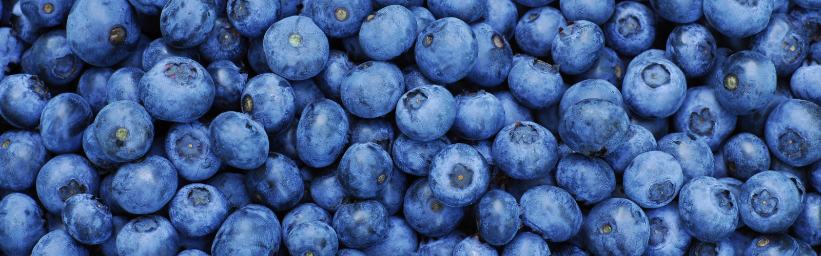 Blueberries - Fruits to Increase Sperm Count and Motility